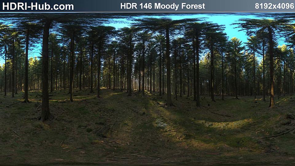 HDRI Hub 146 Moody Forest