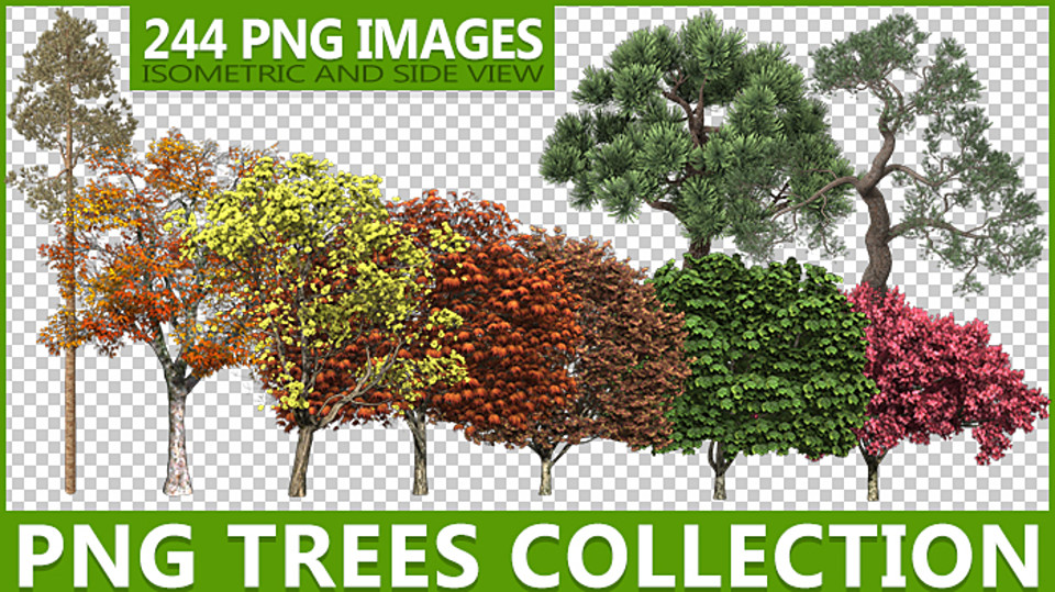 PNG TREES COLLECTION