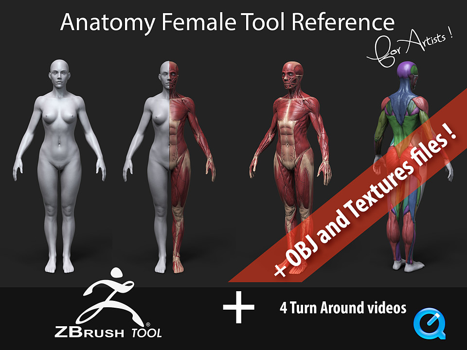 Anatomy Female Tool Reference For Artists