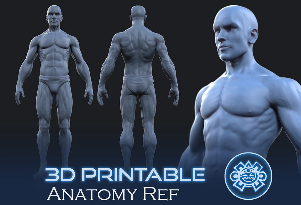 Printable Male Anatomy Figure