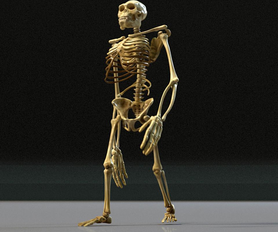 Kong Skeleton Maya Rig