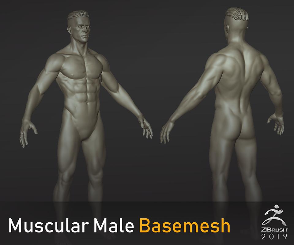 Muscular Male Basemesh