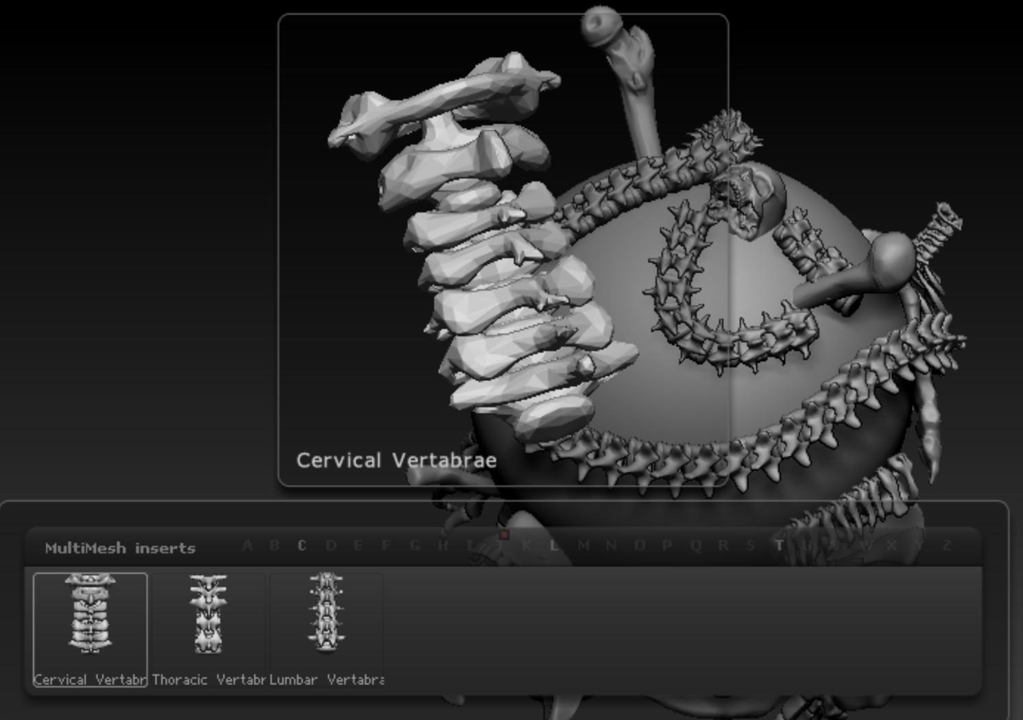 IMM Skeleton and Spine Curve Brush set Zbrush