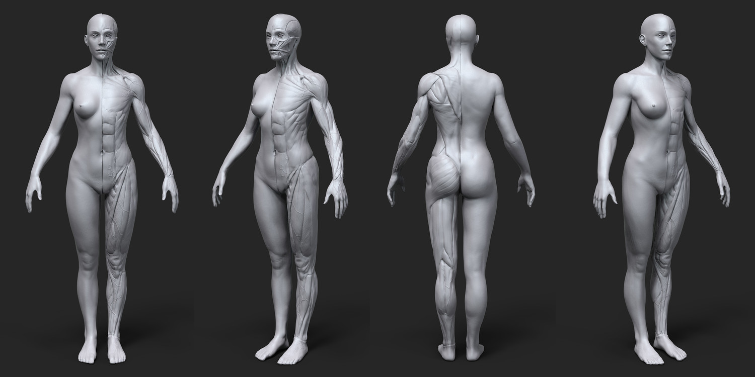 Anatomy Female Tool Reference for Artists !