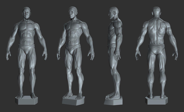 Printable Male Anatomy Figure
