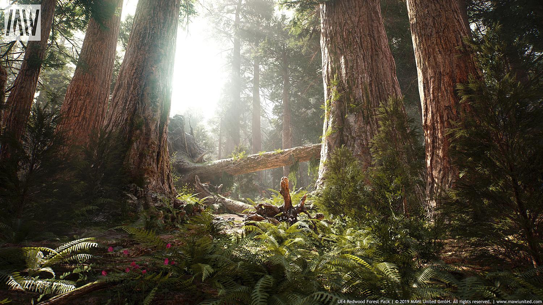 UE4 - REDWOOD FOREST PACK