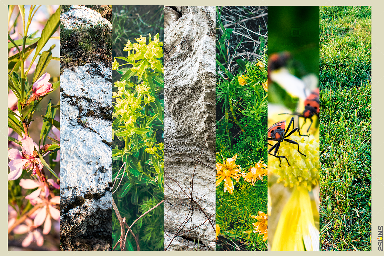 download textures photoshop, 30 Nature