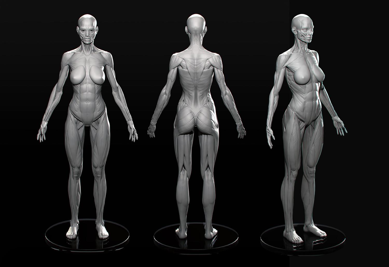 Simple Female Figure Tutorial