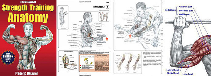 Unique The Anatomy Of Strength Training Photo - Anatomy And ...